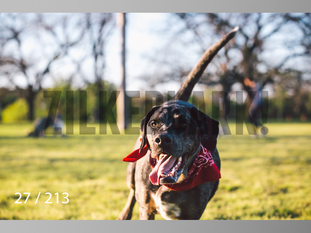 Dogs Rest WM-027.jpg