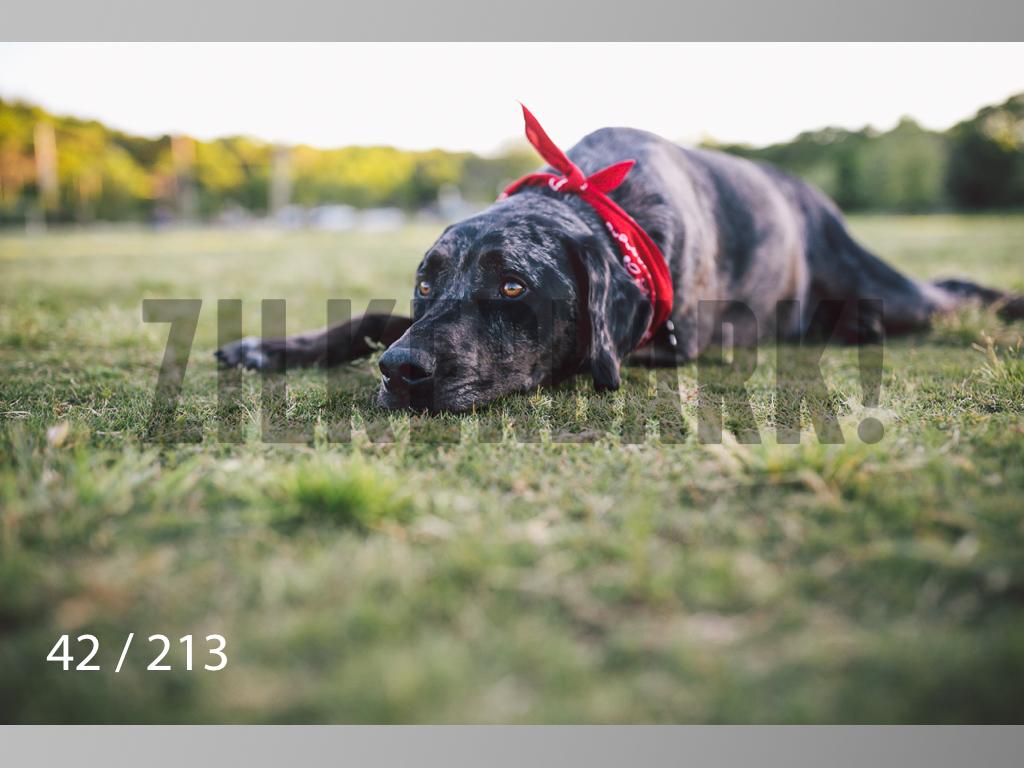 Dogs Rest WM-042.jpg