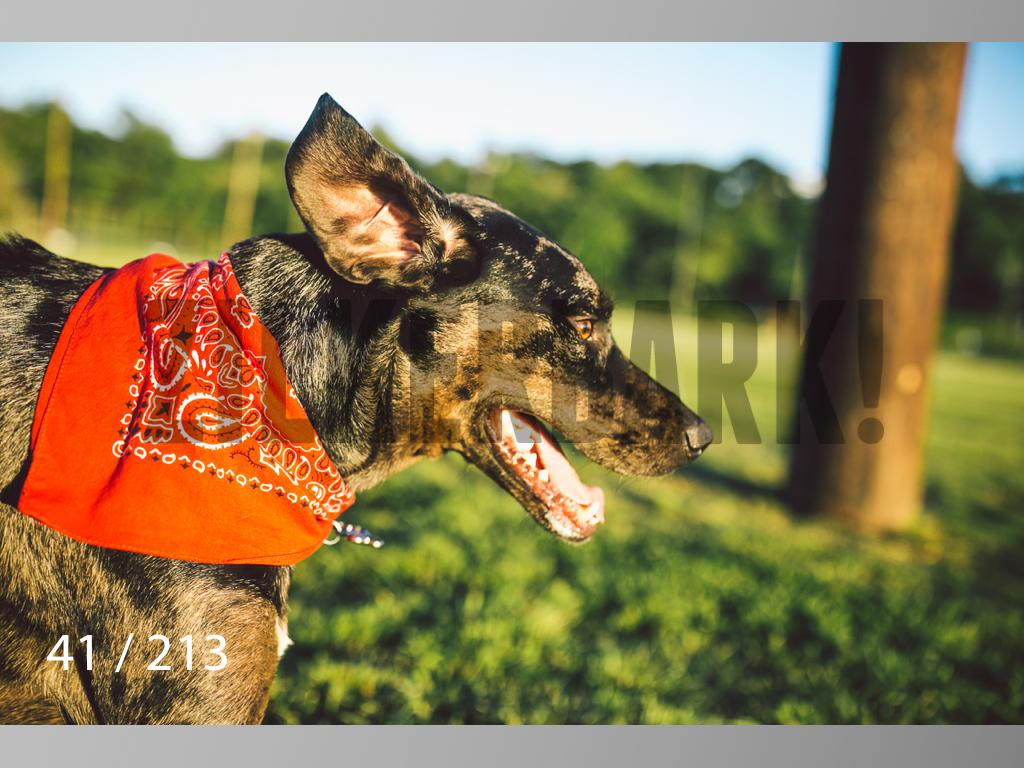 Dogs Rest WM-041.jpg