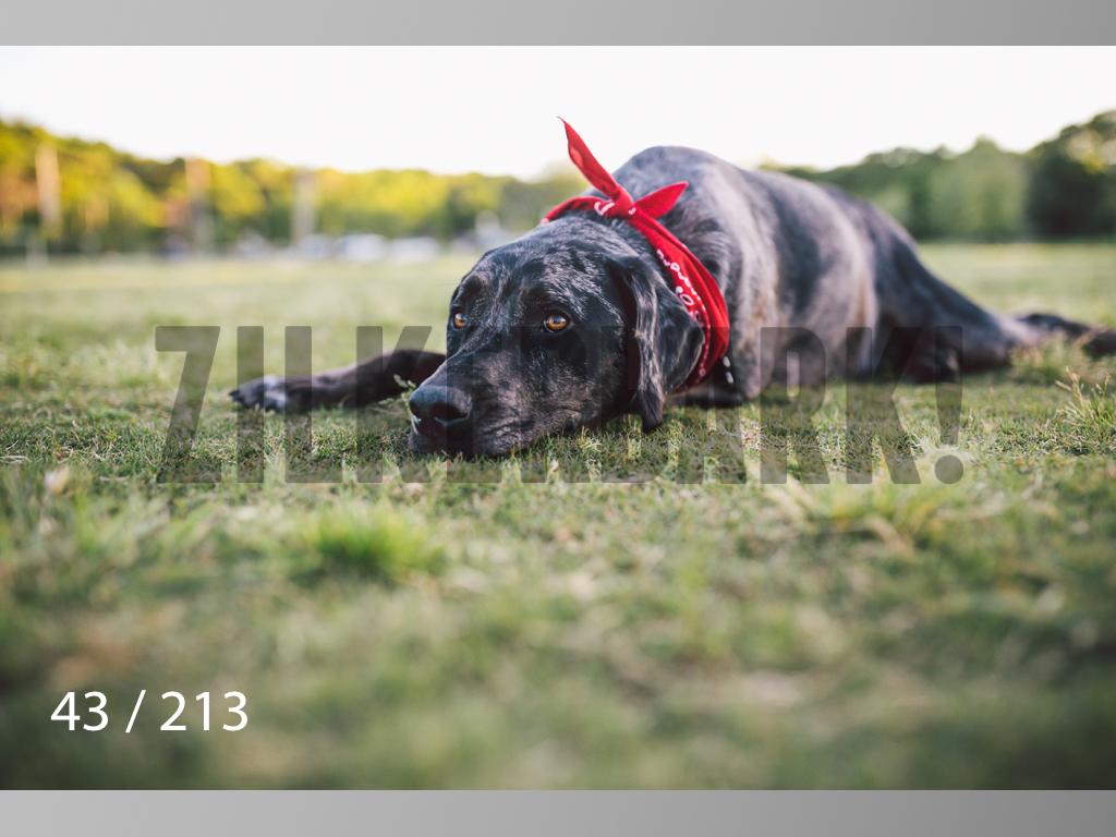 Dogs Rest WM-043.jpg