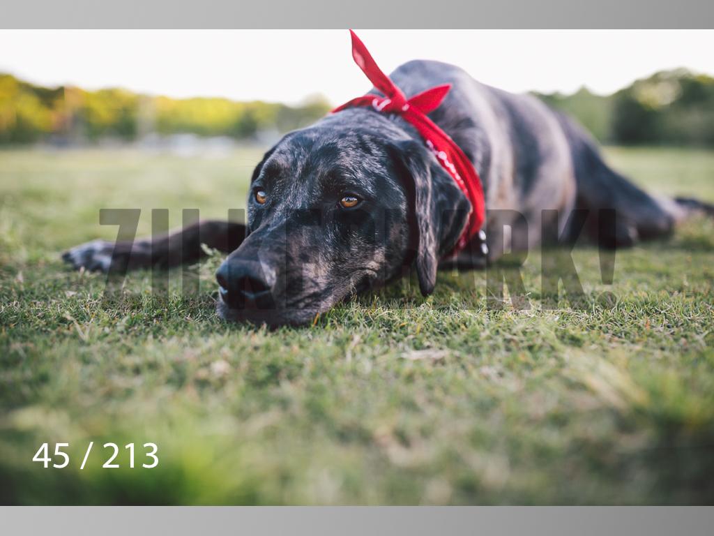 Dogs Rest WM-045.jpg