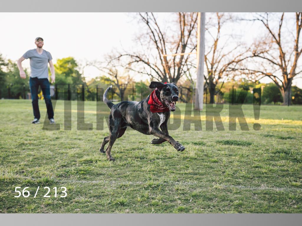 Dogs Rest WM-056.jpg