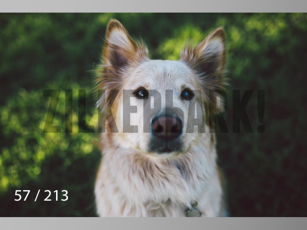 Dogs Rest WM-057.jpg