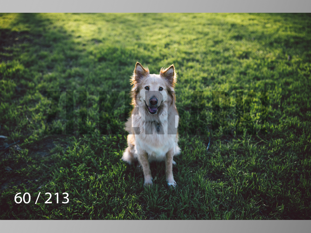 Dogs Rest WM-060.jpg
