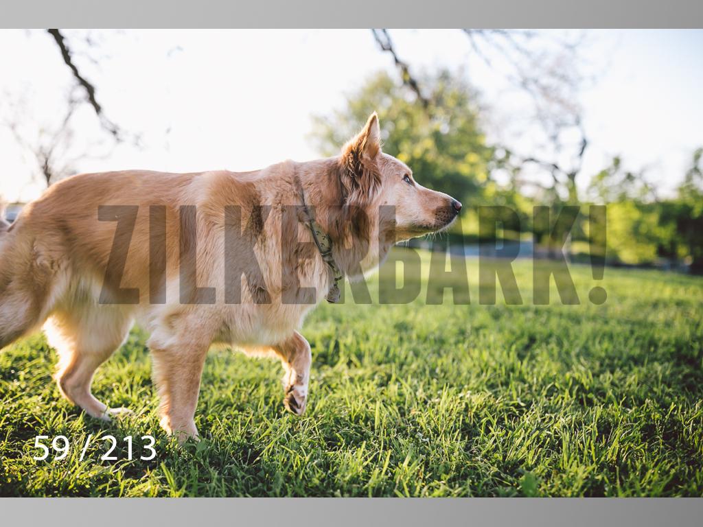 Dogs Rest WM-059.jpg