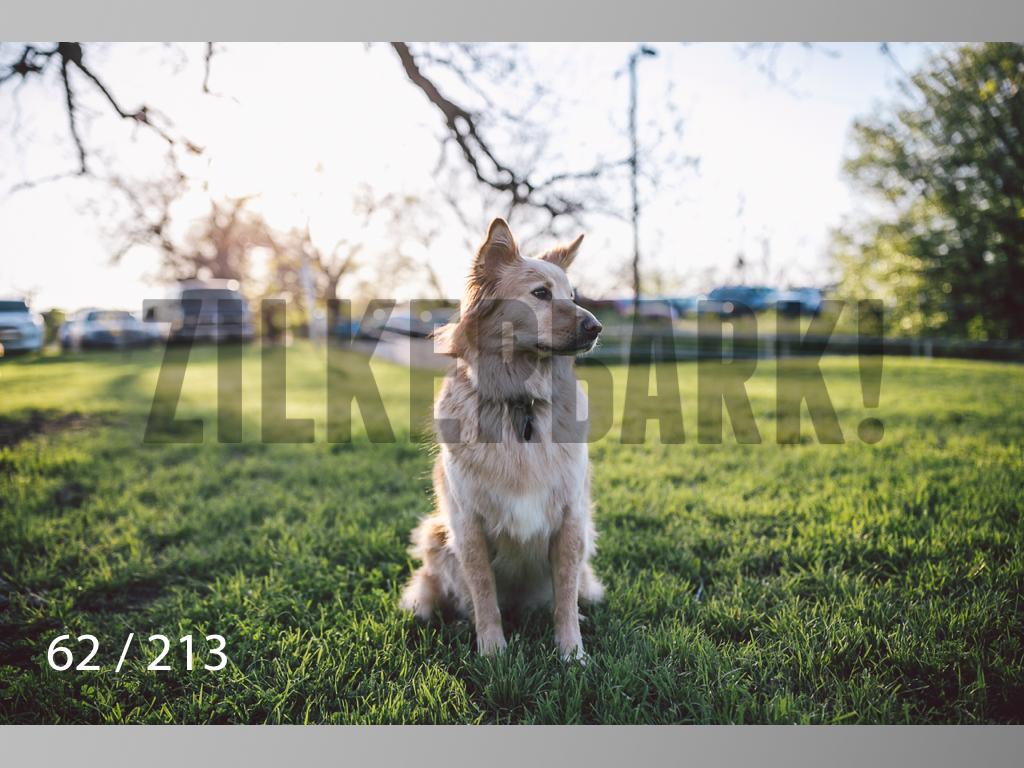 Dogs Rest WM-062.jpg