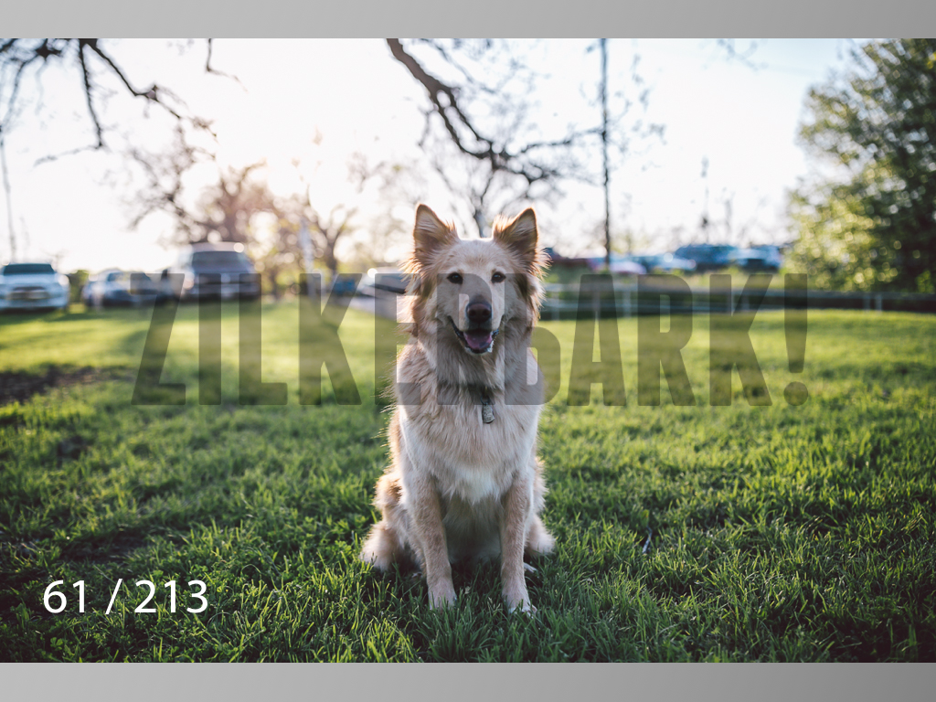 Dogs Rest WM-061.jpg