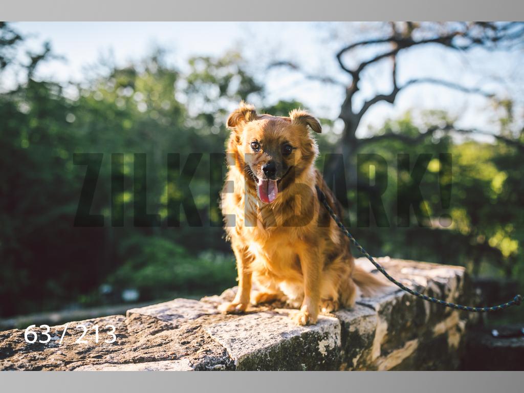 Dogs Rest WM-063.jpg