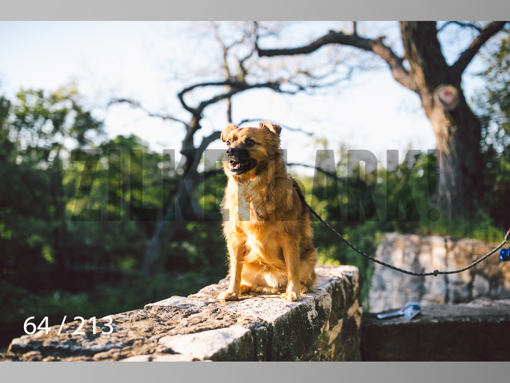 Dogs Rest WM-064.jpg