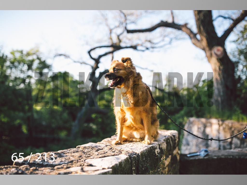 Dogs Rest WM-065.jpg