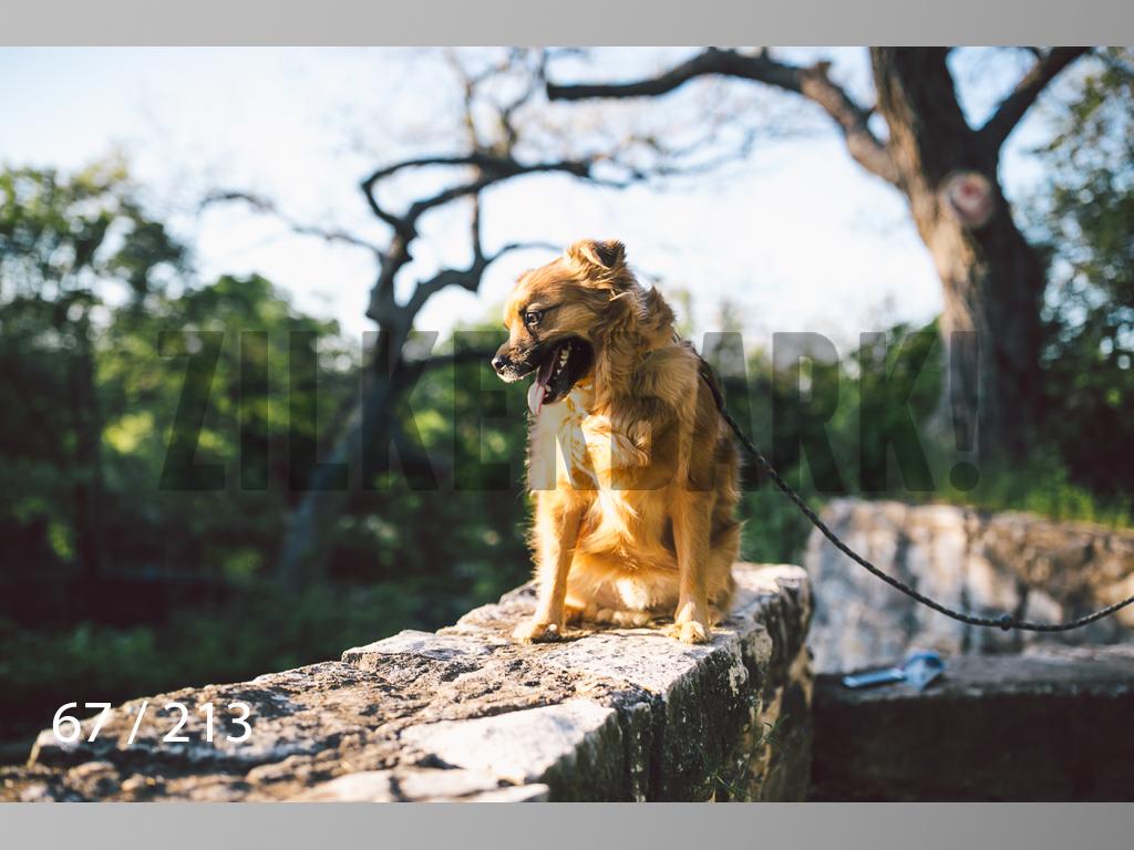 Dogs Rest WM-067.jpg