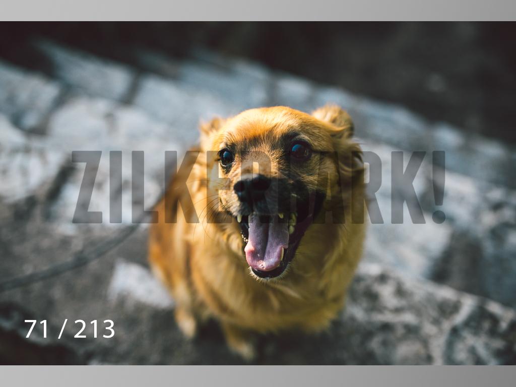 Dogs Rest WM-071.jpg