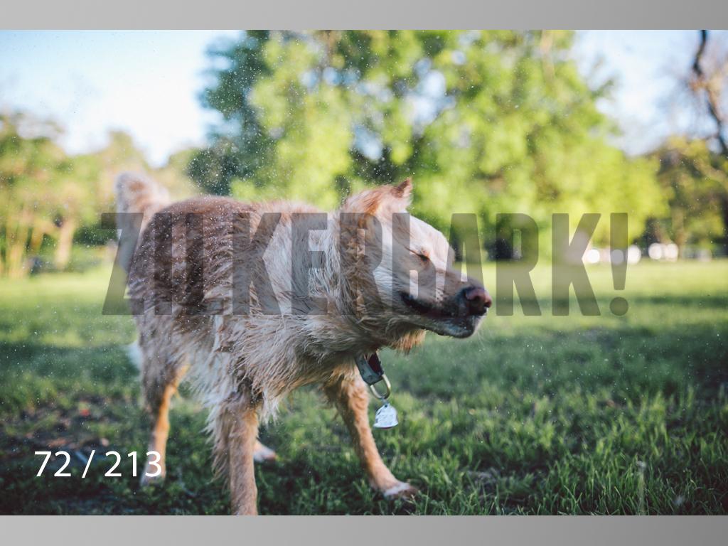 Dogs Rest WM-072.jpg