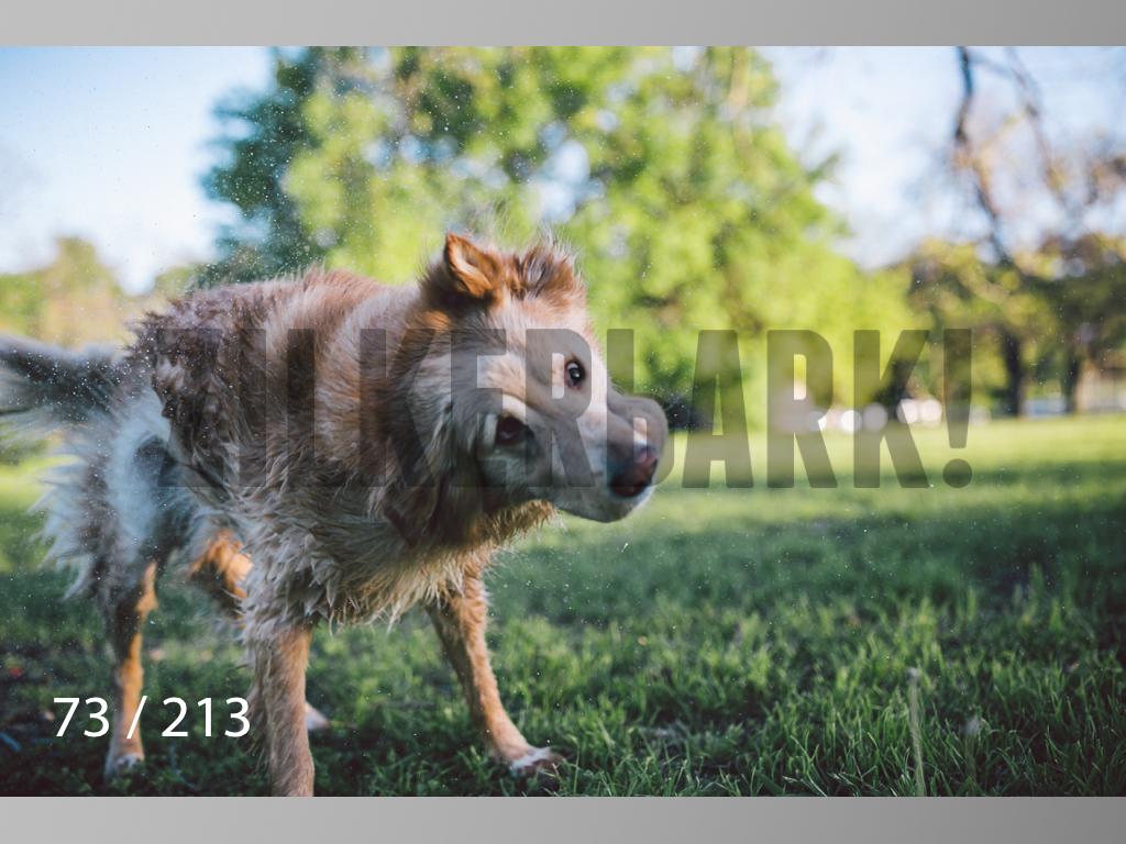 Dogs Rest WM-073.jpg