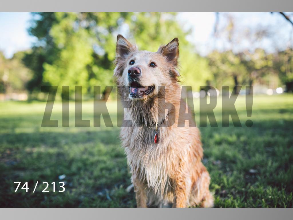 Dogs Rest WM-074.jpg