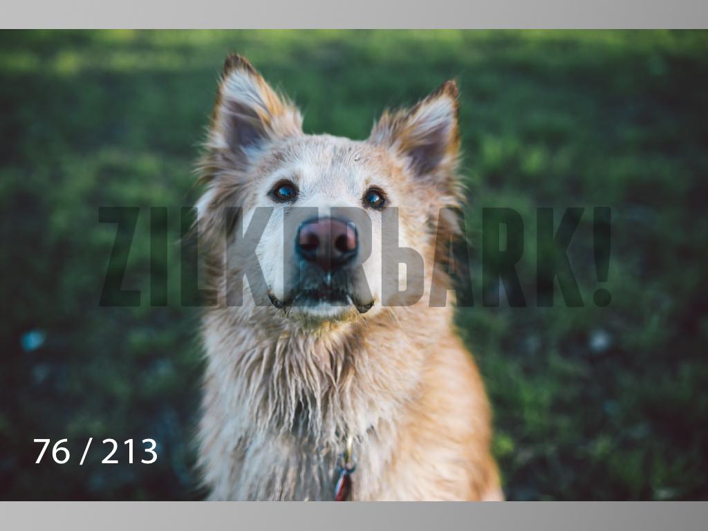 Dogs Rest WM-076.jpg
