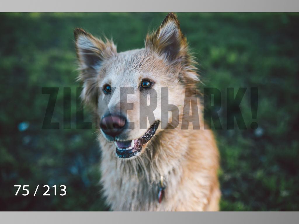 Dogs Rest WM-075.jpg