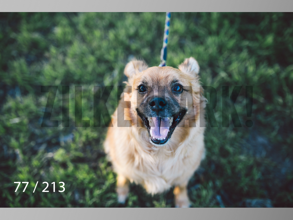 Dogs Rest WM-077.jpg