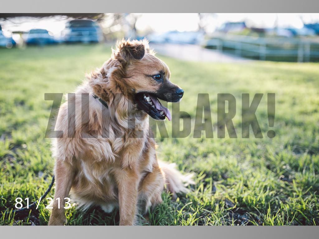 Dogs Rest WM-081.jpg