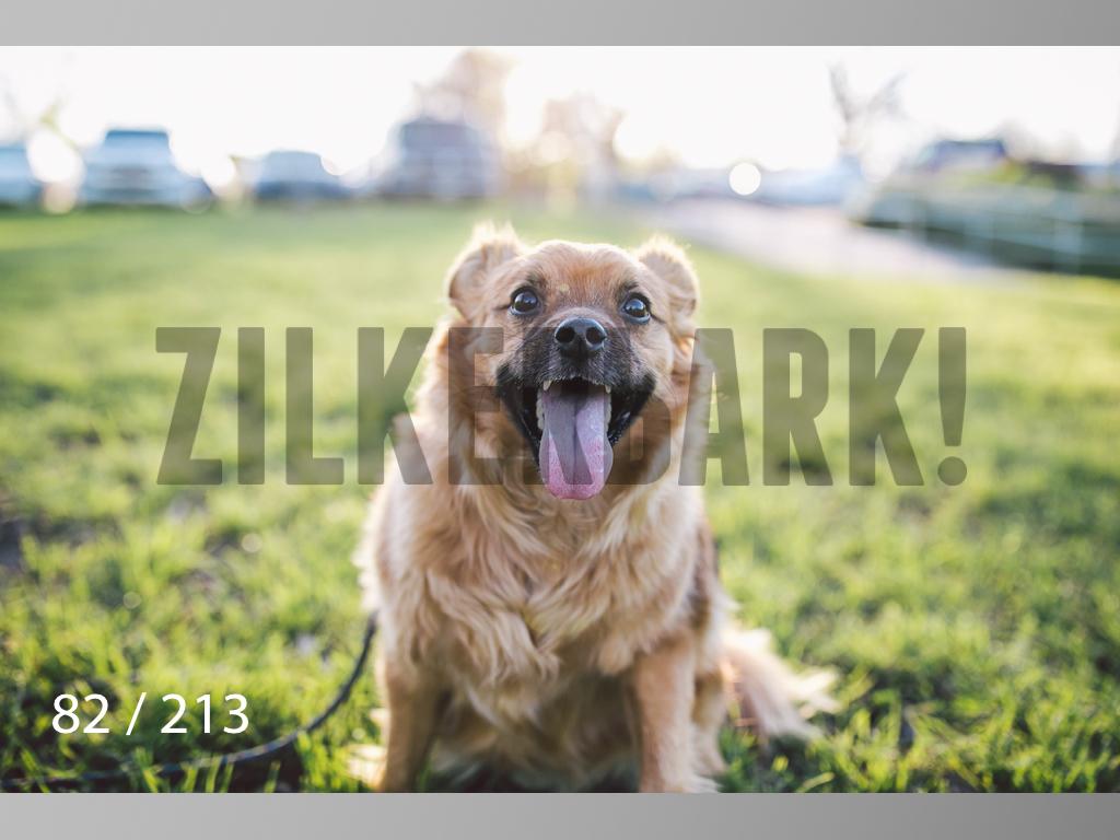 Dogs Rest WM-082.jpg