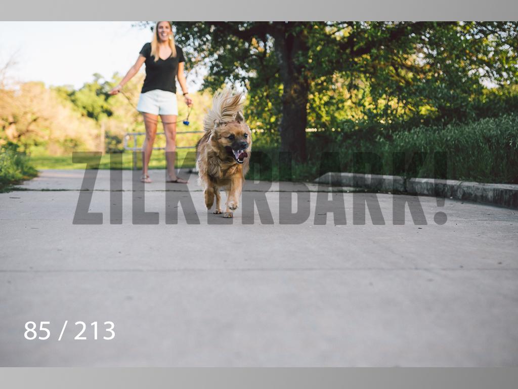 Dogs Rest WM-085.jpg