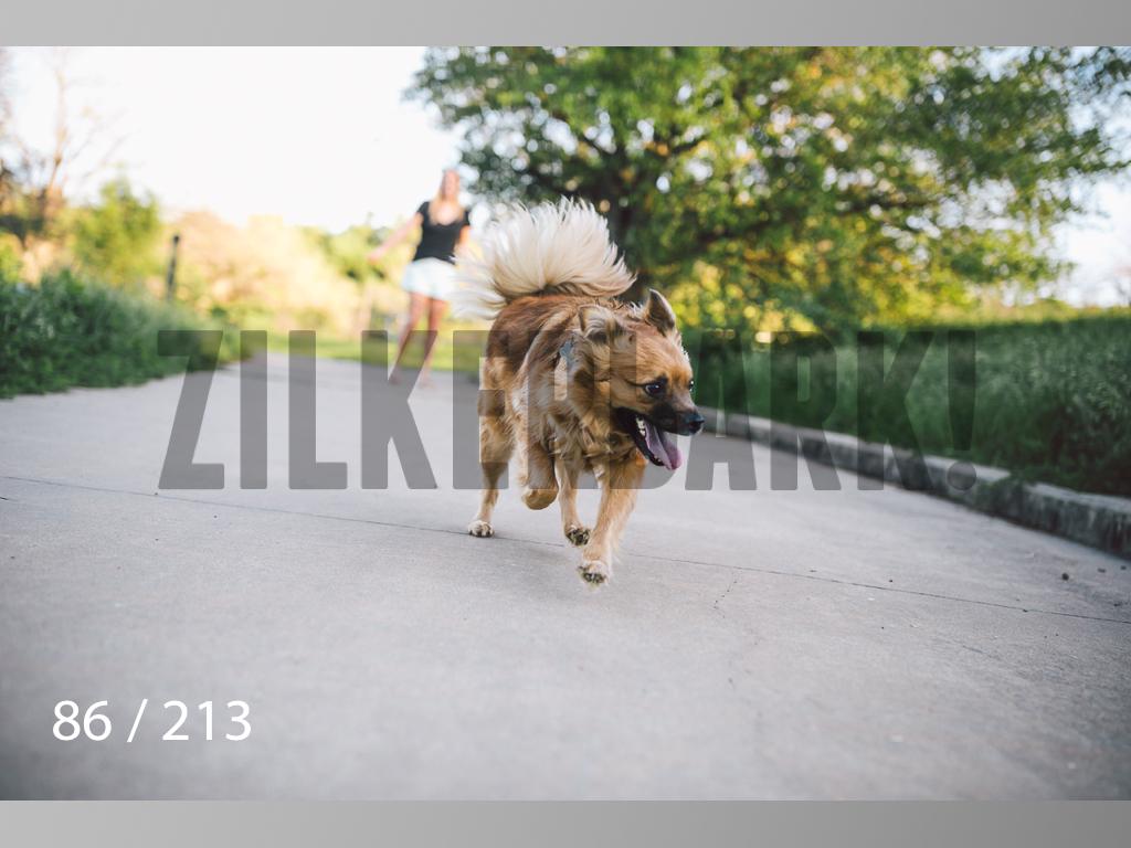 Dogs Rest WM-086.jpg
