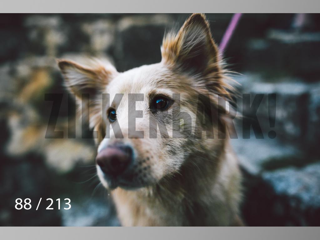 Dogs Rest WM-088.jpg