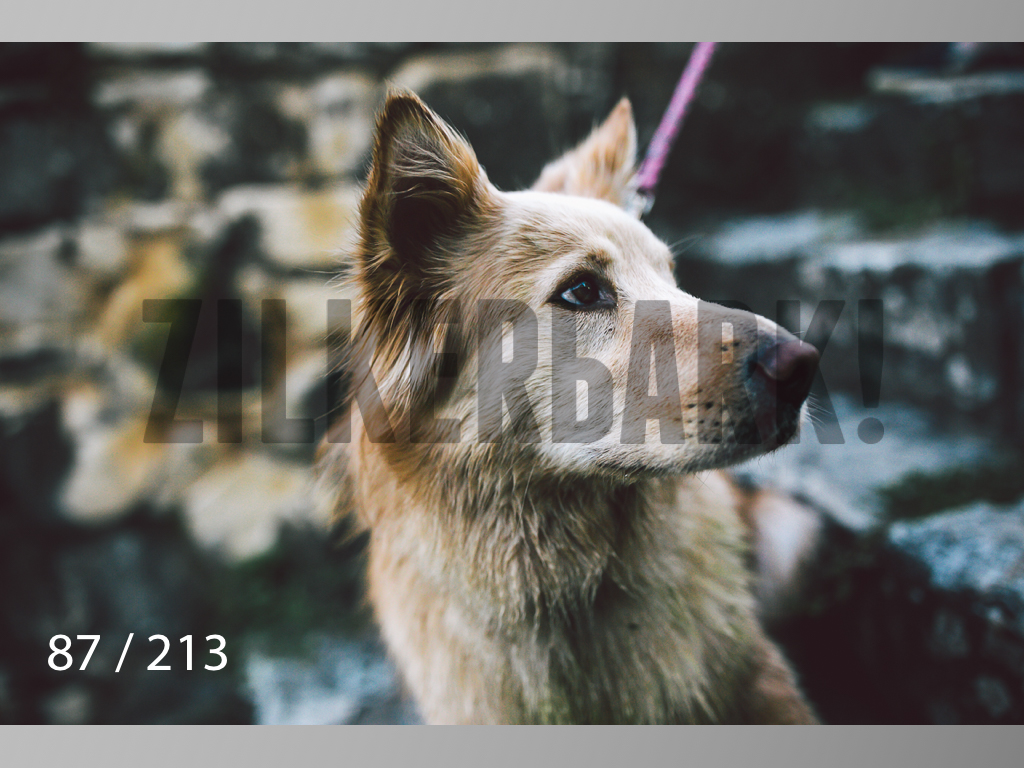 Dogs Rest WM-087.jpg