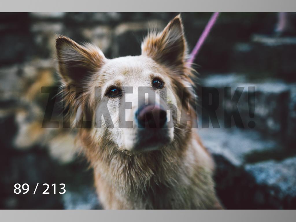 Dogs Rest WM-089.jpg