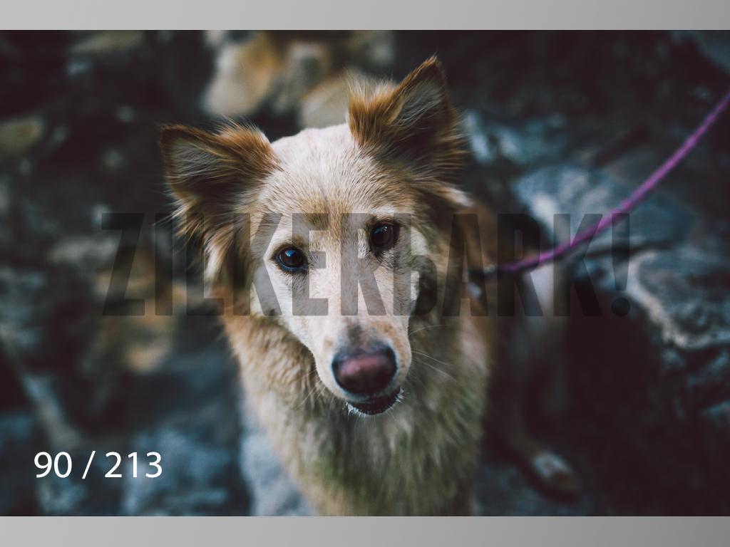 Dogs Rest WM-090.jpg