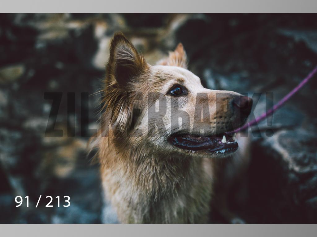 Dogs Rest WM-091.jpg