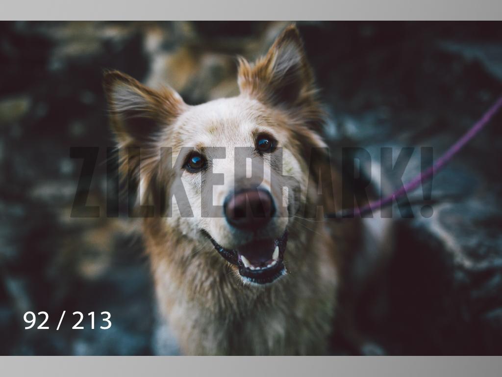 Dogs Rest WM-092.jpg