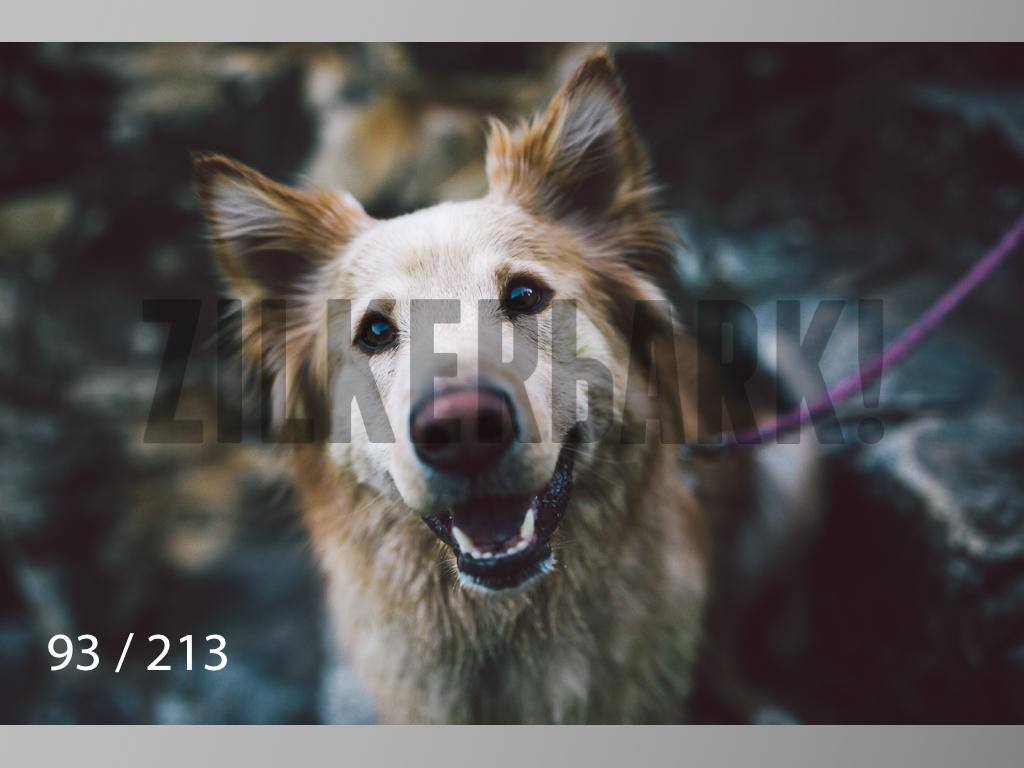 Dogs Rest WM-093.jpg