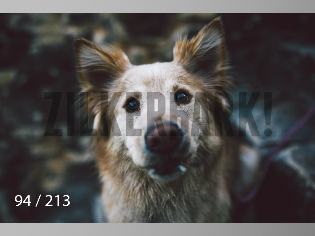 Dogs Rest WM-094.jpg