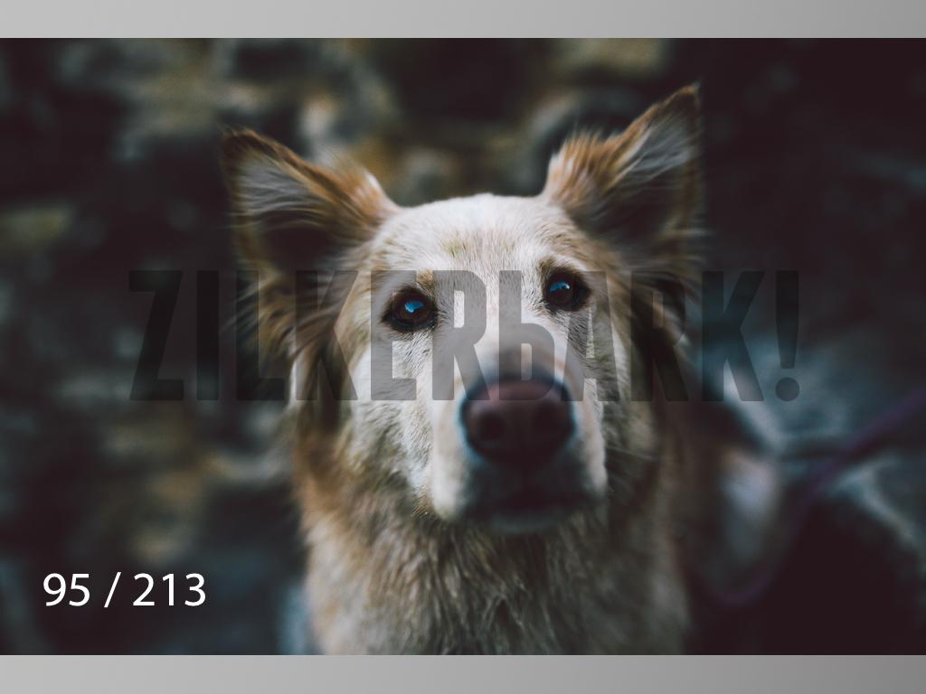 Dogs Rest WM-095.jpg
