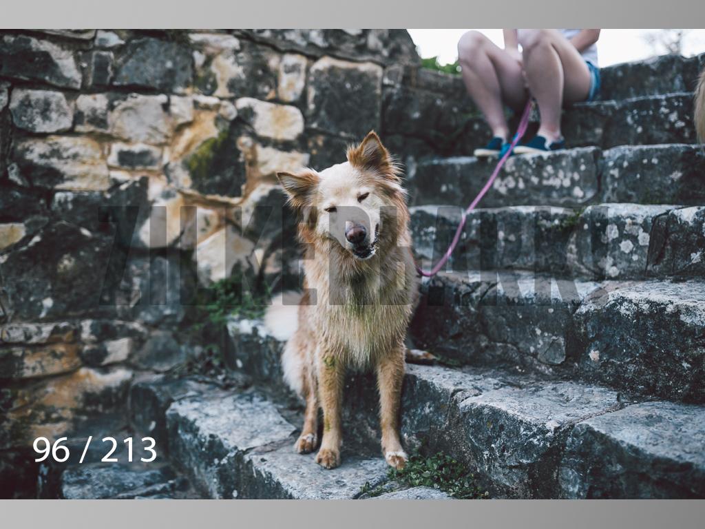 Dogs Rest WM-096.jpg