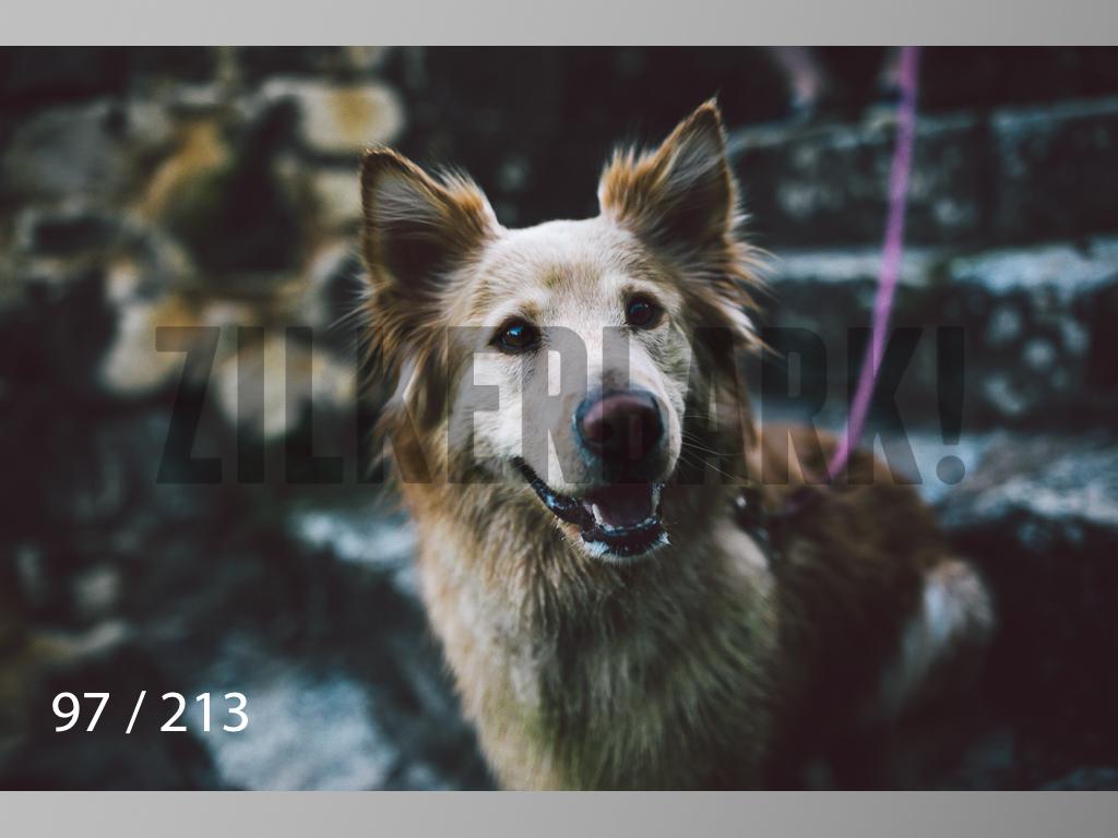 Dogs Rest WM-097.jpg