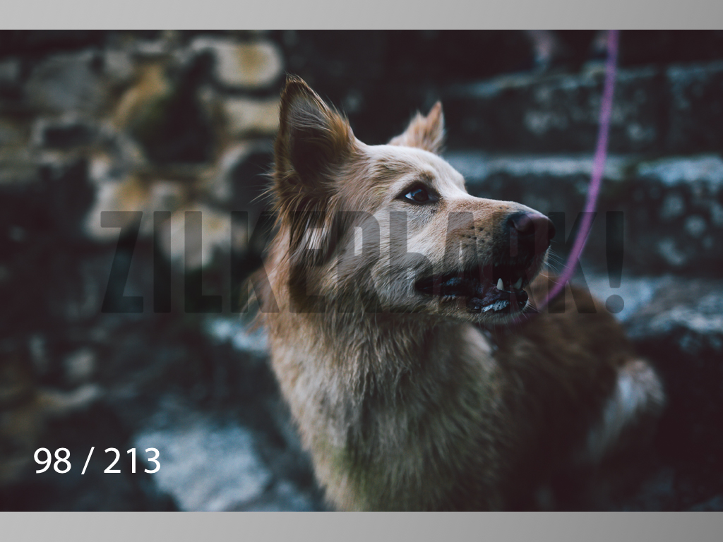 Dogs Rest WM-098.jpg