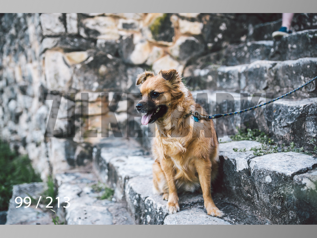 Dogs Rest WM-099.jpg