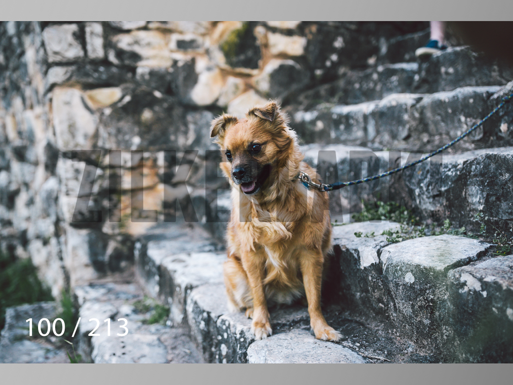 Dogs Rest WM-100.jpg