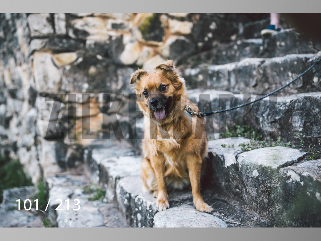 Dogs Rest WM-101.jpg