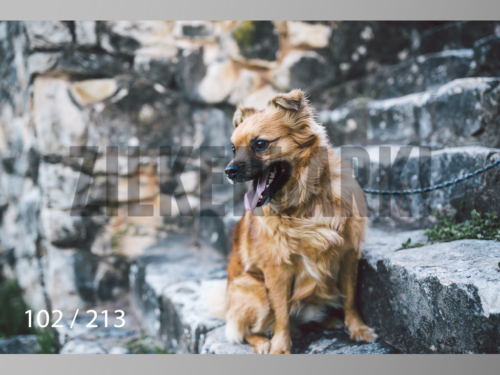 Dogs Rest WM-102.jpg