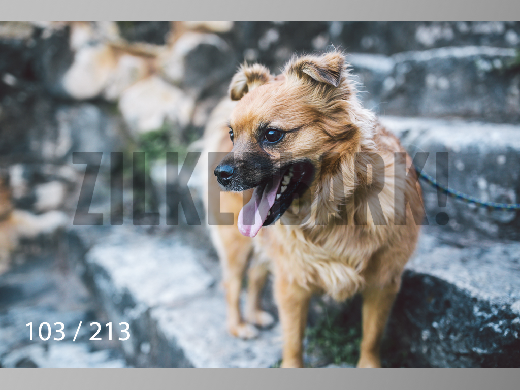 Dogs Rest WM-103.jpg