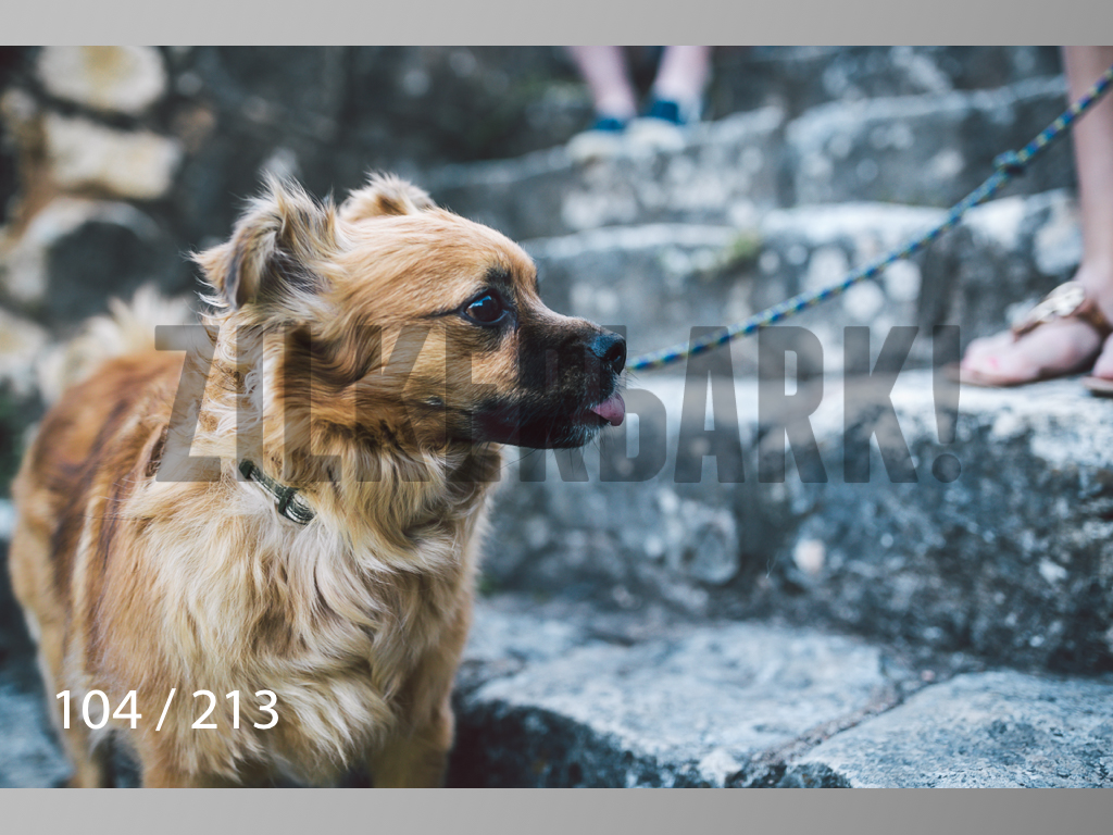 Dogs Rest WM-104.jpg
