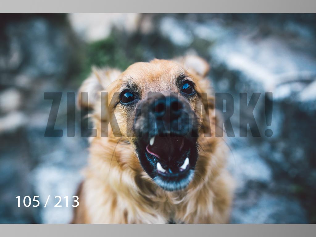 Dogs Rest WM-105.jpg