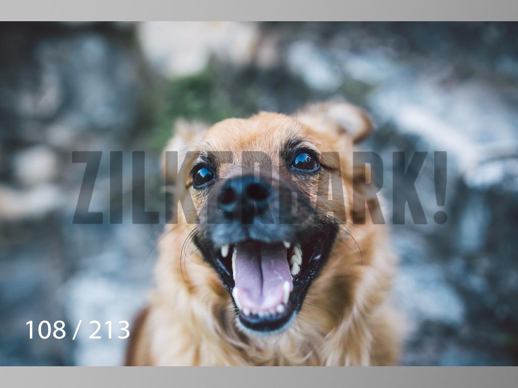 Dogs Rest WM-108.jpg