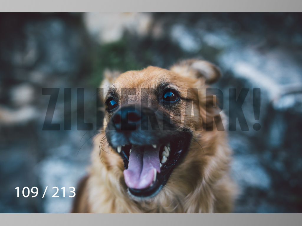 Dogs Rest WM-109.jpg