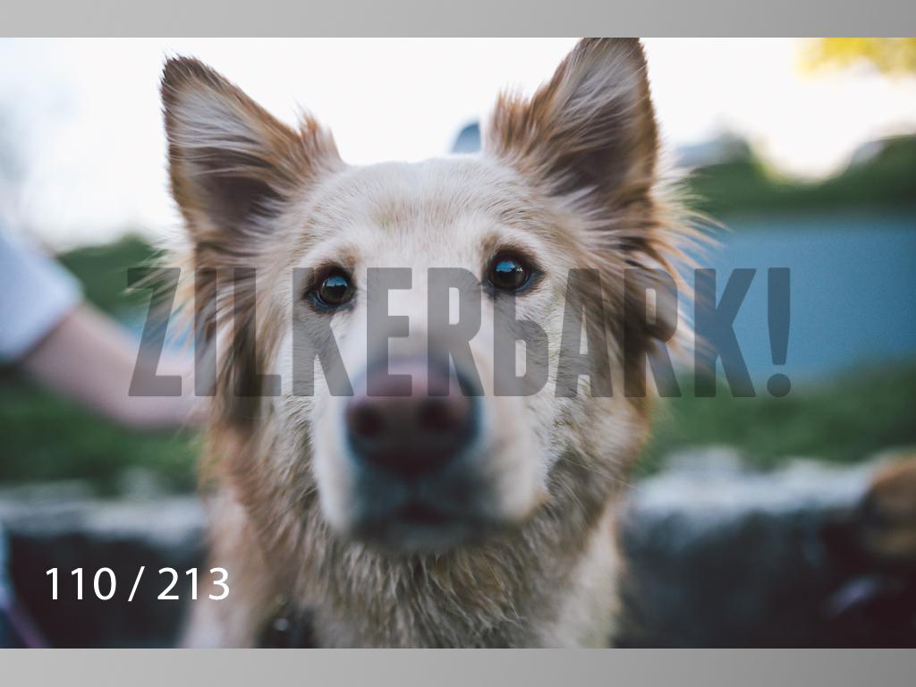 Dogs Rest WM-110.jpg