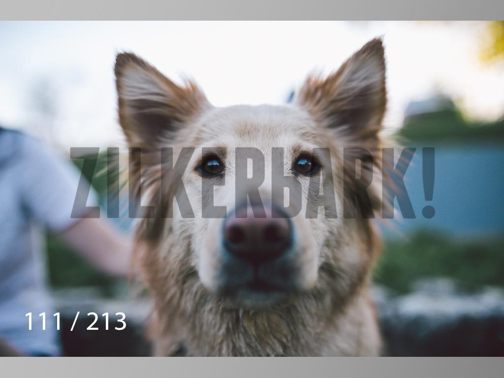 Dogs Rest WM-111.jpg