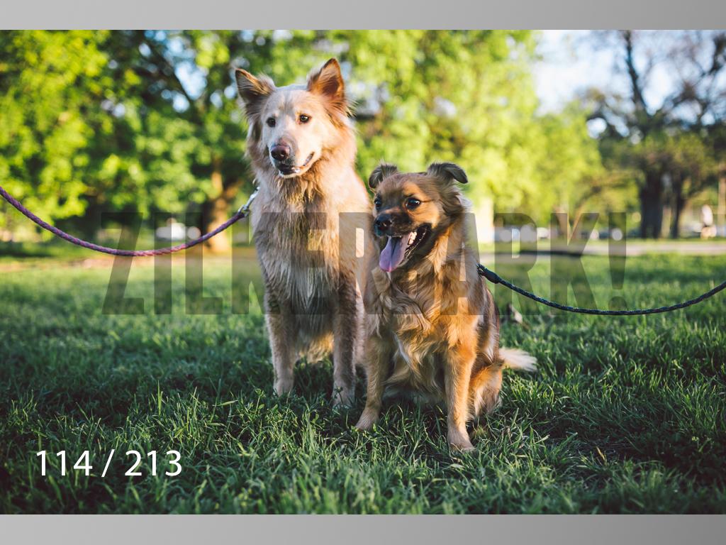 Dogs Rest WM-114.jpg